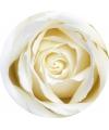 10 ronde onderzetters met witte roos